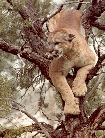 lion_resize_in_tree.jpg
